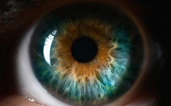 Cornea & Ocular Surface